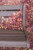 Folhas secas do outono e uma cadeira vazia de madeira fotografia de stock