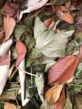 Folhas secas do quadro completo fotos de stock royalty free