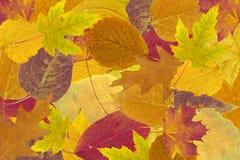 Folhas secas - fundo Fotografia de Stock Royalty Free