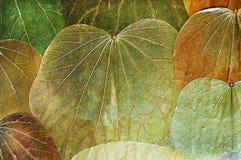Folhas secas naturais do fundo Foto de Stock Royalty Free