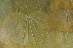 Folhas secas naturais do fundo fotos de stock royalty free