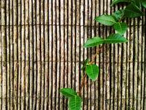 Folhas selvagens Fotografia de Stock