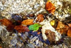 Folhas sob a água imagens de stock