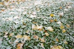 Folhas sob a neve fresca Foto de Stock
