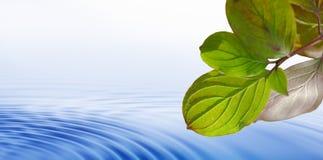 Folhas sobre a água imagem de stock royalty free