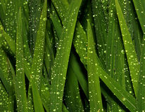 Folhas Sparkling fotografia de stock