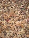 Folhas, sumário Foto de Stock Royalty Free