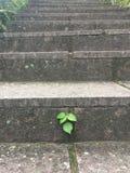 Folhas tenazes foto de stock
