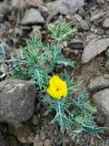 Folhas terrificando com flor bonita Imagem de Stock Royalty Free