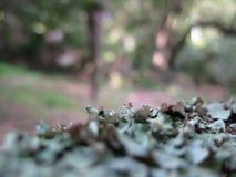 Folhas Textured do verde Imagem de Stock