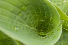 Folhas torcidas do verde Imagem de Stock