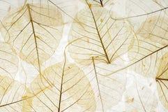 Folhas transparentes Fotografia de Stock Royalty Free
