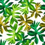 Folhas tropicais Fotografia de Stock Royalty Free