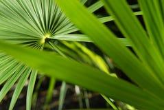 Folhas tropicais   Imagem de Stock