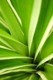 Folhas tropicais Fotos de Stock