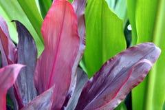 Folhas tropicais imagens de stock