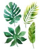 Folhas tropicais ilustração do vetor