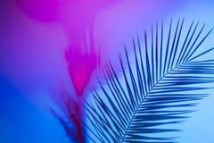 Folhas tropicais brilhantes do para?so, folhas de palmeira na luz de n?on fotos de stock royalty free