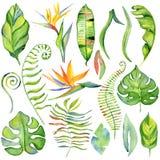 Folhas tropicais da aquarela Foto de Stock Royalty Free