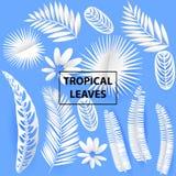 Folhas tropicais do corte do Livro Branco Elemets exóticos das plantas do verão na moda com a sombra isolada no fundo cinzento Ve ilustração do vetor