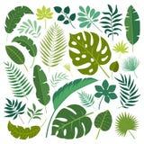 Folhas tropicais do teste padrão ajustado do vetor ilustração royalty free
