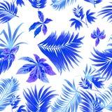 Folhas tropicais do teste padrão sem emenda da palmeira Imagem de Stock