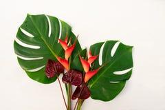 Folhas tropicais do verde fotografia de stock