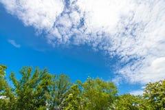 Folhas tropicais do verde no nuvem-céu branco background1 Fotos de Stock