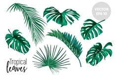 Folhas tropicais do vetor ajustadas isoladas Imagens de Stock Royalty Free