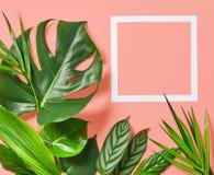 Folhas tropicais e quadro branco fotos de stock
