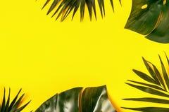 Folhas tropicais fundo, spase da cópia foto de stock