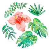Folhas tropicais isoladas no fundo branco Imagem de Stock