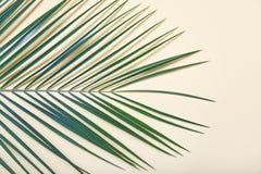 Folhas tropicais no fundo pastel Imagem de Stock Royalty Free