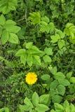 Folhas tropicais verdes Fotos de Stock Royalty Free