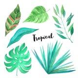 Folhas tropicais verdes da aquarela ajustadas Imagens de Stock Royalty Free