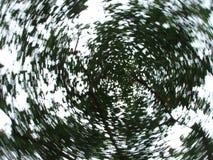 Rodopiando as folhas Imagem de Stock