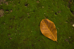 Folhas uma folha no musgo Imagem de Stock Royalty Free