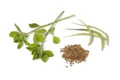 Folhas, vagens e sementes do feno-grego Fotos de Stock Royalty Free