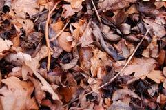 Folhas velhas da queda Fotografia de Stock Royalty Free