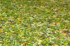 Folhas verde-amarelas Imagem de Stock Royalty Free