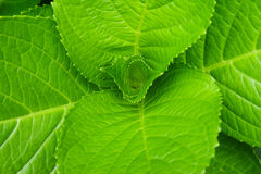 Folhas verdes Fotos de Stock Royalty Free