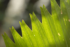 Folhas verdes Imagens de Stock Royalty Free