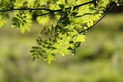 Folhas verdes imagem de stock royalty free