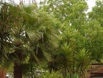 Folhas verdes bonitas da palma fotografia de stock royalty free