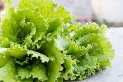 Folhas verdes da alface Folhas da alface no fundo de madeira Alface fresca na mesa de cozinha Alimento biológico saudável Fotos de Stock Royalty Free