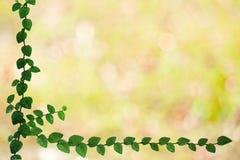folhas verdes da beira da natureza de Coatbuttons e para borrar o bokeh amarelo fotografia de stock royalty free