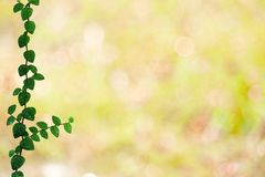 folhas verdes da beira da natureza de Coatbuttons e para borrar o bokeh amarelo fotografia de stock