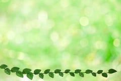 folhas verdes da beira da natureza de Coatbuttons e para borrar o bokeh verde foto de stock royalty free