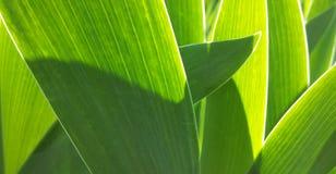 Folhas verdes da flor com esboço branco Fotos de Stock Royalty Free