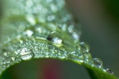 Folhas verdes da mola e do verão com imagem do macro dos waterdrops Imagens de Stock Royalty Free